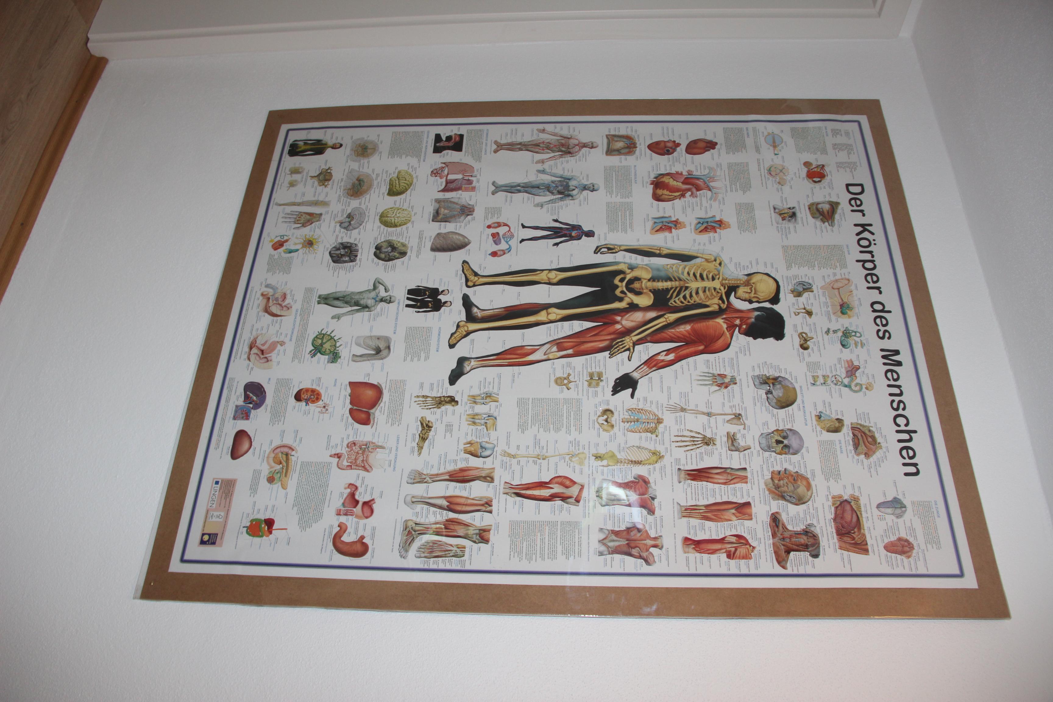 Körperatlas Plakat