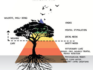 Maslow's Hierarchy of Needs for Zoo Animals