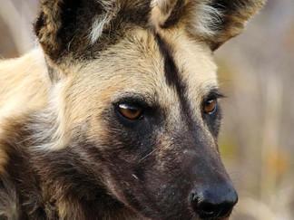 WAZA Animal Welfare Strategy 2015