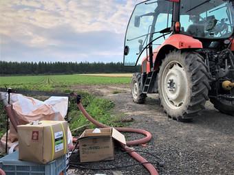 キトサン処理で小豆の発芽促進