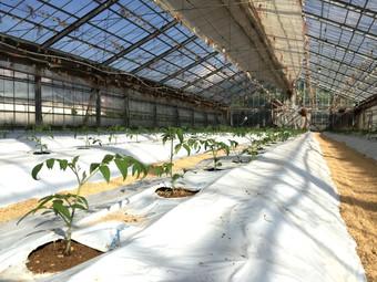 緑肥で炭素補給の土作り