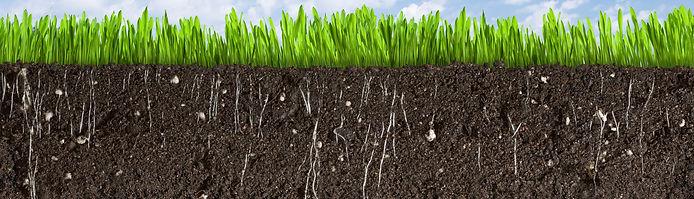 soil organism chitin chitosan