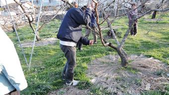 美味しい桃のできる土作り