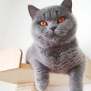 Nossa linda Liva Cats Greisy.jpg