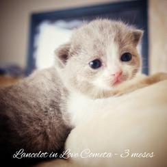 Lancelot in Love Cometa