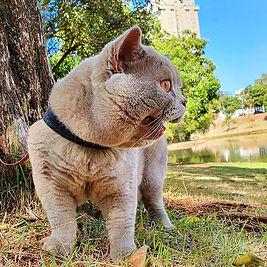 Gizzy passeando no parque._._._.jpg