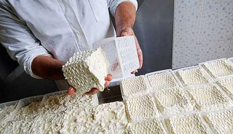 i mastri caseari arriveranno ad adagiare la cagliata di caciofiore nelle tipiche fuscelle di forma quadrata,