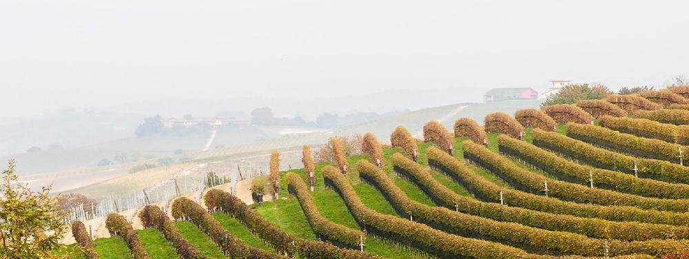 Le dolci colline del Monferrato