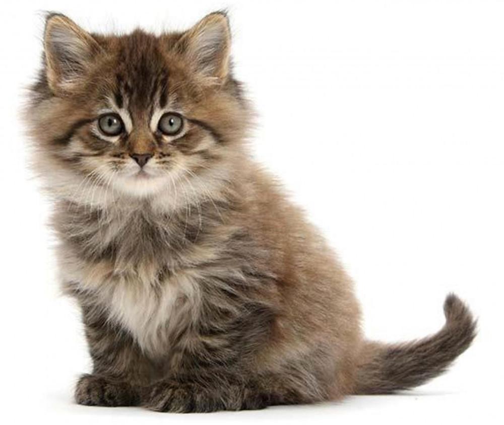 Sauvignon e pipi di gatto