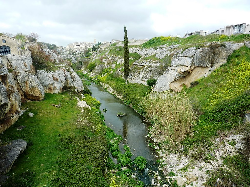 Il vino Gravina Bianco Doc esprime bene l'Alta Murgiaun paesaggio disegnato da vaste praterie ricche di erbe fiori, funghi ed erbe selvatiche e percorso dai venti marini.