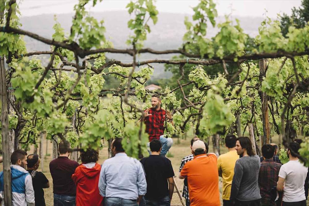 corsi di aggiornamento per i docenti eavviare progetti in cui saranno le aziende vitivinicole, i consorzi, i musei enogastronomici ad affiancare i docenti stessi nell'insegnamento