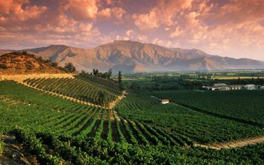 Barbera: vitigni italiani emigrano in Cile