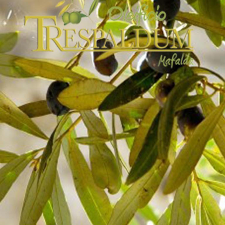 La biodiversità olivicola: la cultivar Gentile di Mafalda