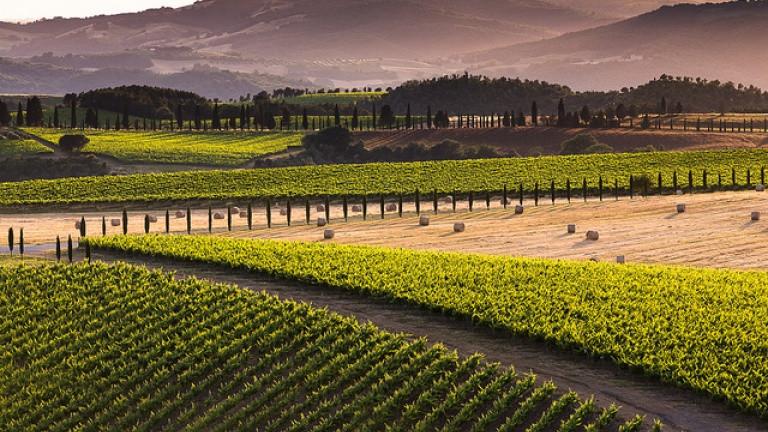 paesaggio Montalcino