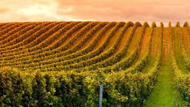 Bordeaux Top 15