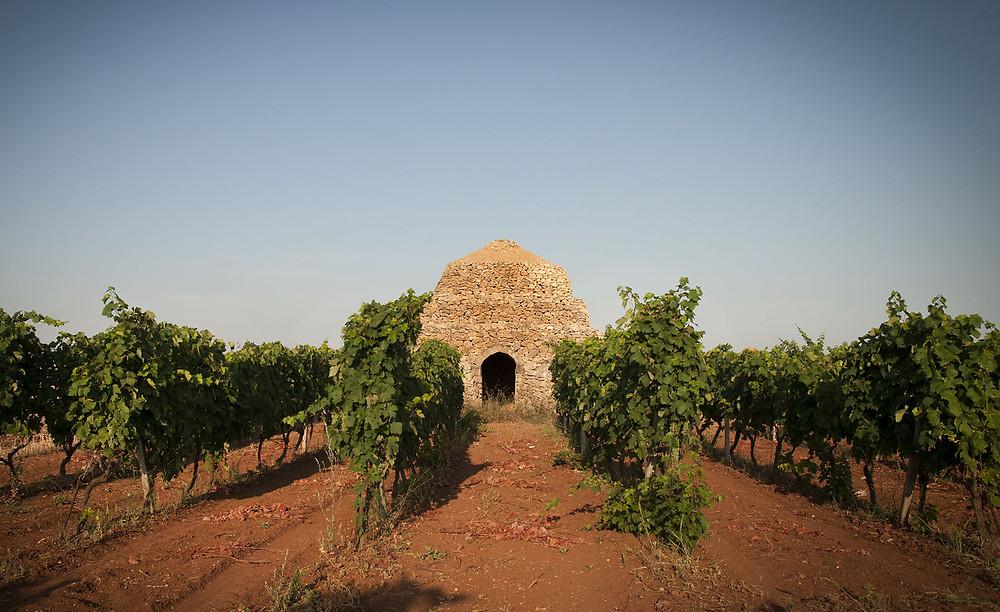 Anche il primitivo ha però i suoi terroir: Manduria e Gioia del Colle, dove terreni e climi favoriscono due stili distinti del vino.