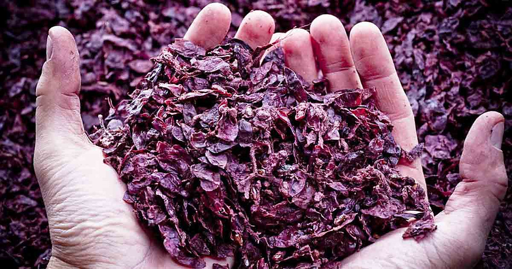 i tannini, composti polifenolici, contenuti nelle bucce e nei vinaccioli,