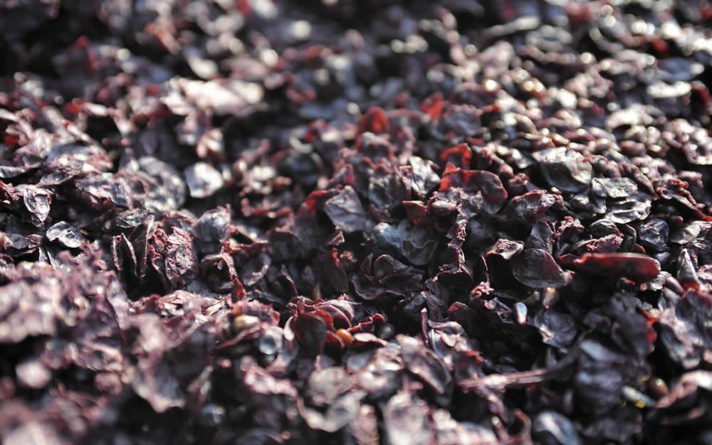 La Grappa è un distillato di vinacce, le bucce delle uve scartate dopo la pigiatura
