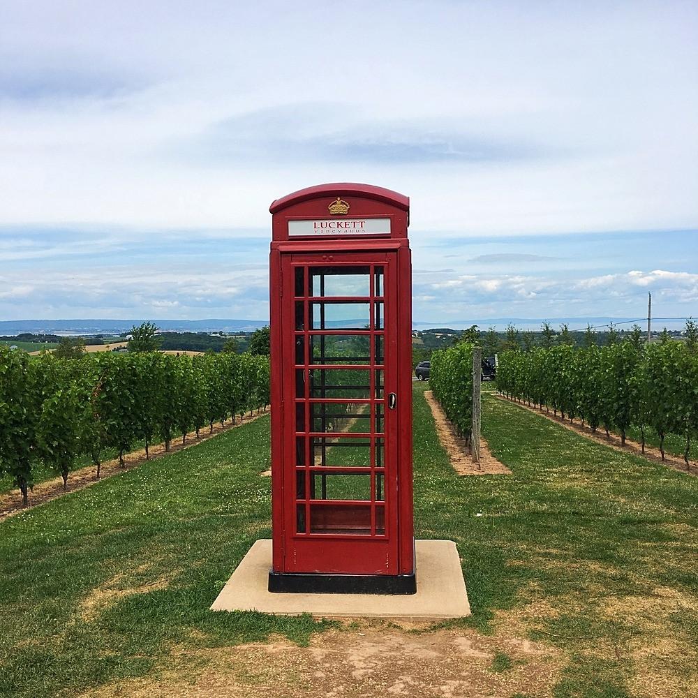Do you speak wine? L'Inghilterra alla conquista del mondo del vino