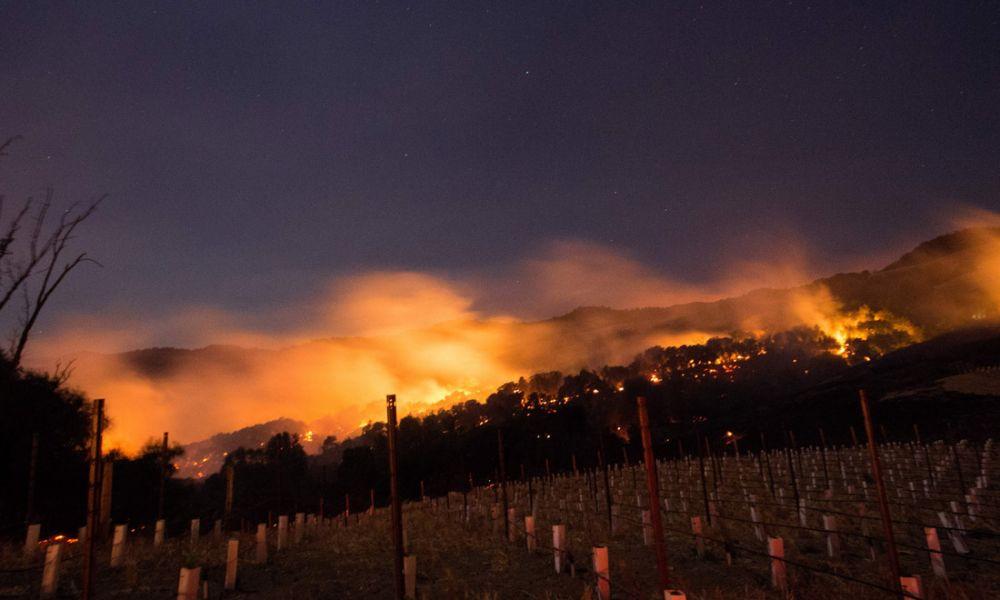 vigneti della California in fiamme