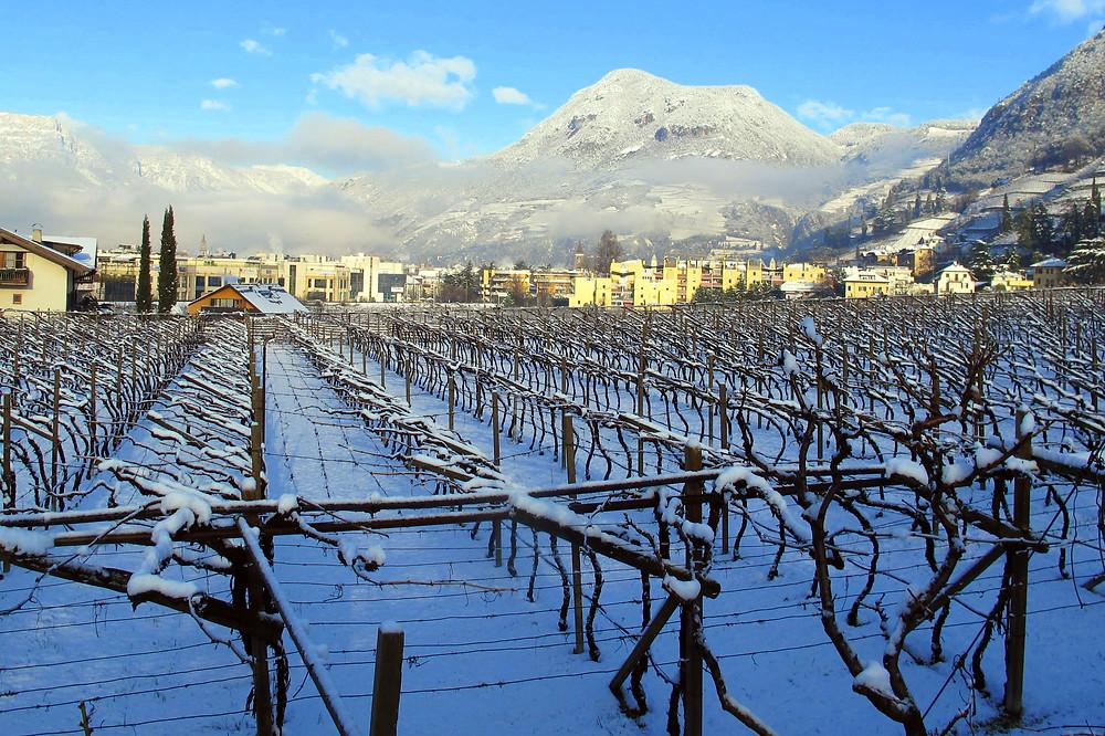 nella piana di Bolzano il Lagrein trova il suo habitat ideale