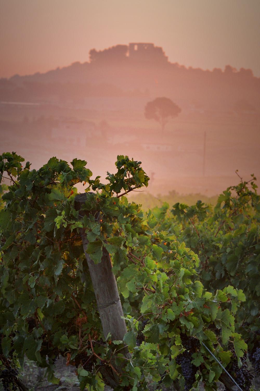 Il vino Gravina Bianco Doc si costruisce intorno al Greco, vitigno di antichissime origini