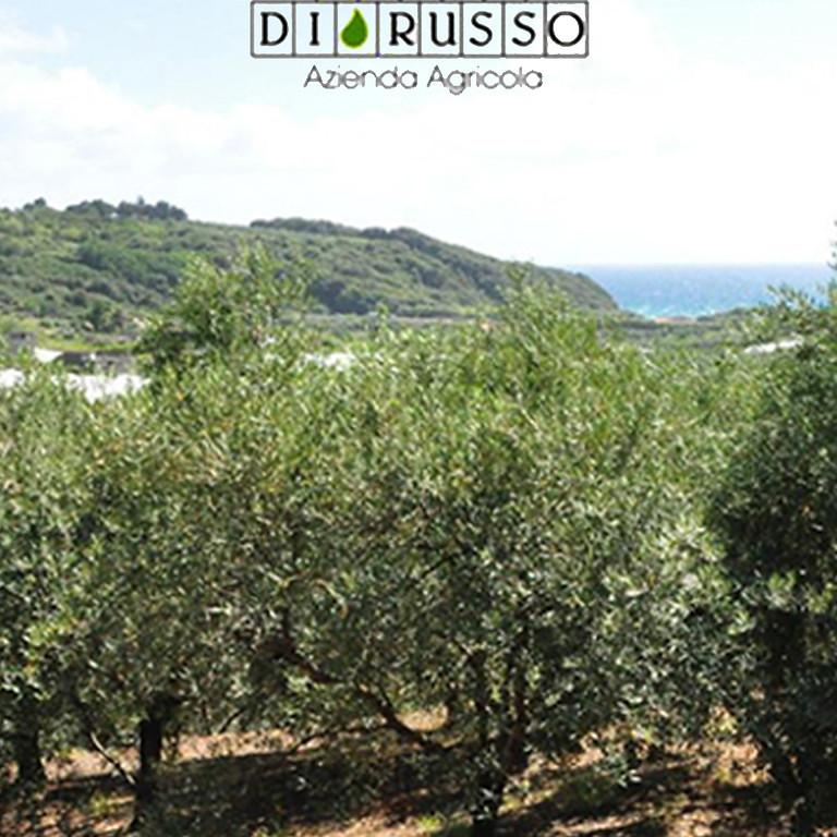 Gaeta: sole, mare e olive