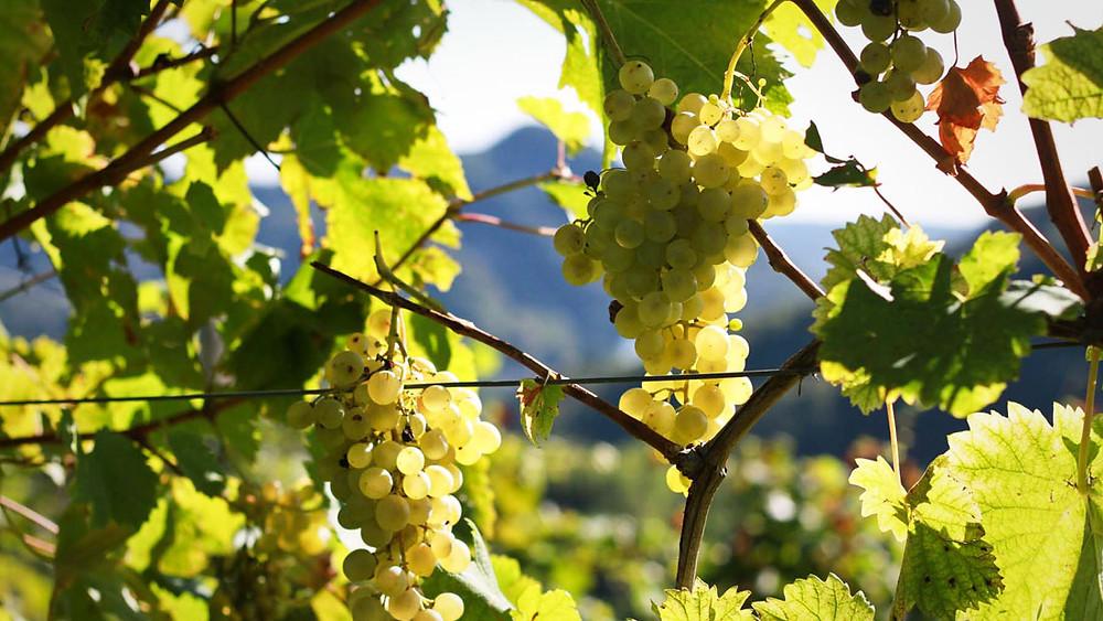 L'Italia aveva già chiesto nel 2013 un intervento dell'Unione Europea contro i produttori di Prosecco made in Australia