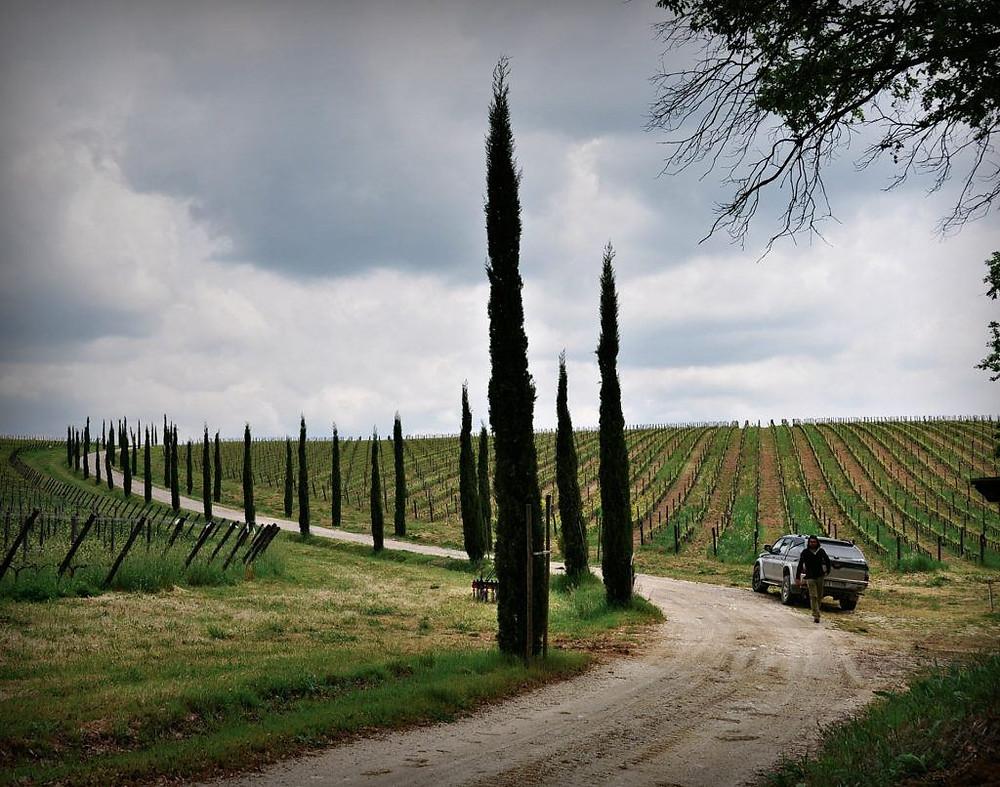 Stefano Amerighi La Valle del Rodano è per lui origine, prospettiva, punto di arrivo.