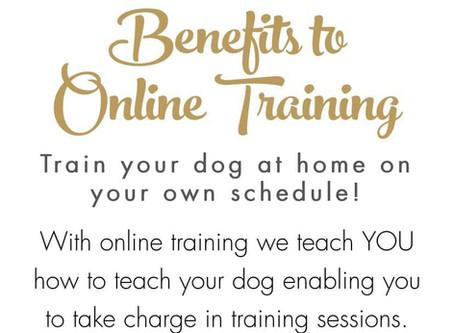 Benefits to Online Dog Training