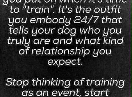 Why Owner's Need To Be Their Dog's Trainer