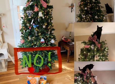 Protecting Your Christmas Tree