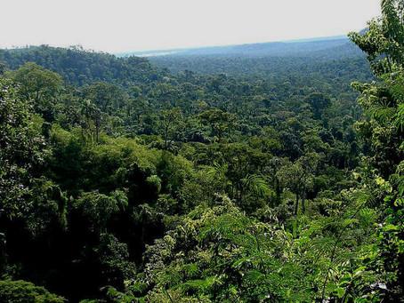 """FSC organiza una jornada sobre """"Certificación FSC de gestión forestal y cadena de custodia""""el 4-Nov"""