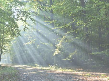 Feijóo: El Plan Forestal marca las directrices de la gestión del monte de los próximos 20 anos