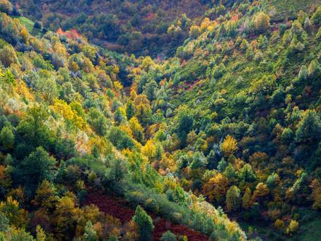 10 montes de Lugo y Ourense entran en el registro de masas consolidadas de frondosas autóctonas