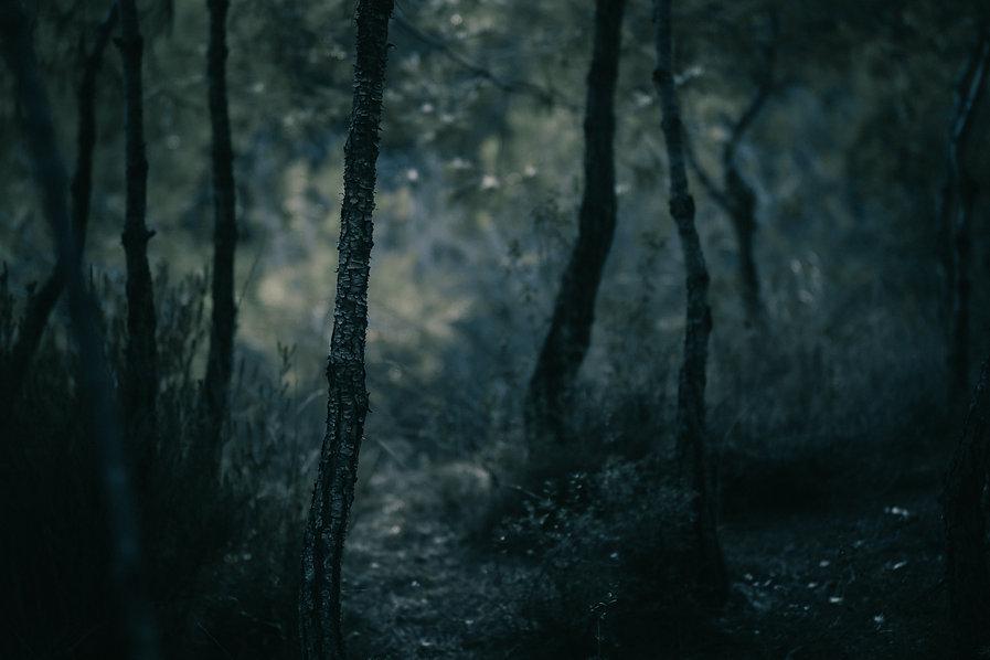 dolomiti selva di cadore ca del bosco.jp