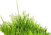 grass_edited.png