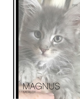 Magnus Merlot