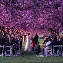 Brooklyn Botanical Garden - Wedding