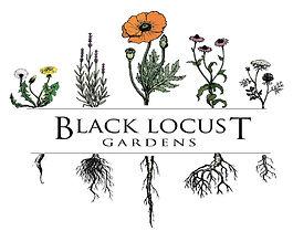 Black Locust Color.jpg