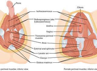 A Guide to Pelvic Floor Dysfunctions and Herbs That Can Help