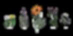 flowerssmall.png