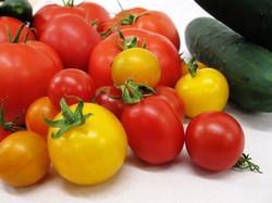 Tomates jardins kamouraska