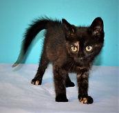 Loving Paws 2020 cats sep.02.jpg