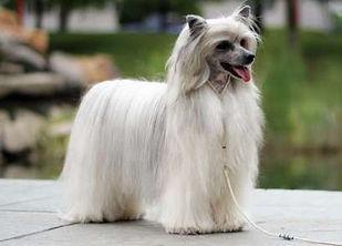 dogs_923b714e7bb22af419f8e6c04a1da611.jp