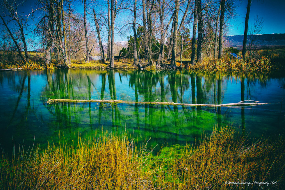 Upon a Green Pond