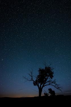 Starry Night - 11 pts