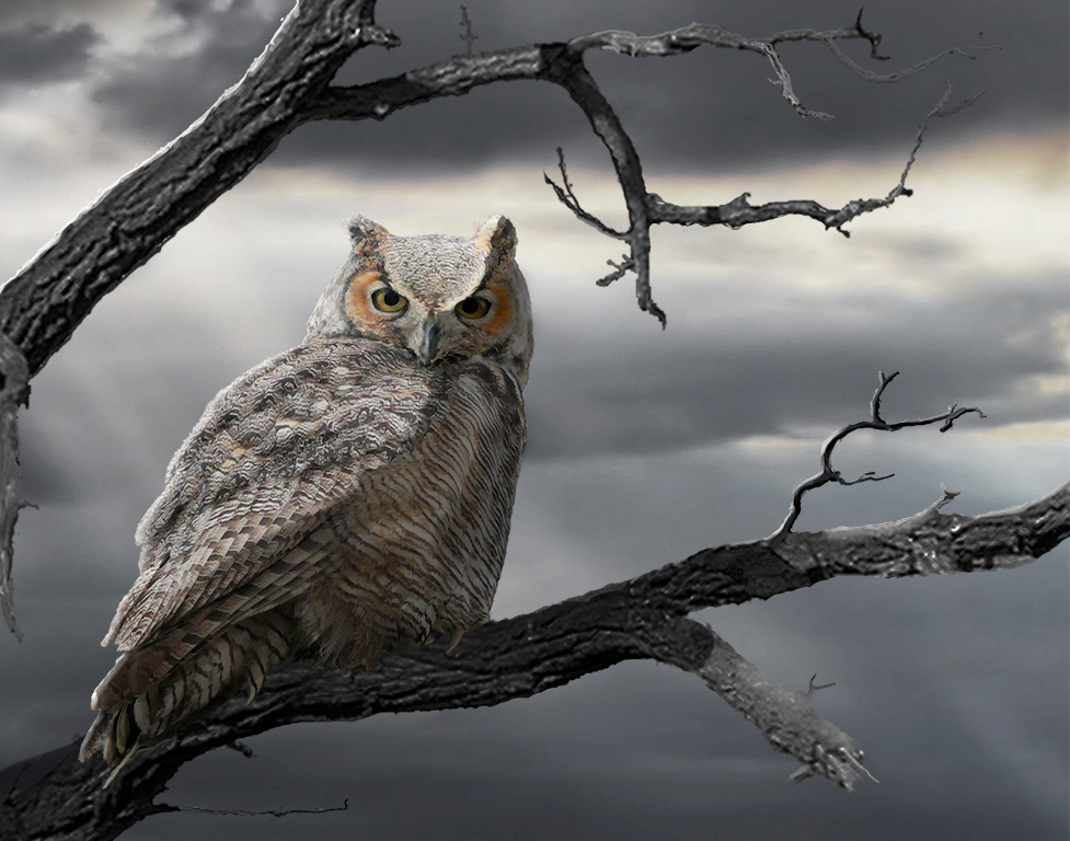 Owl by Moonlight - 7 Points
