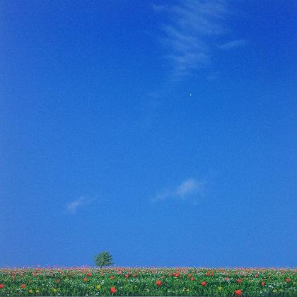 NIGEL WOOD - WILD FLOWER MEADOW