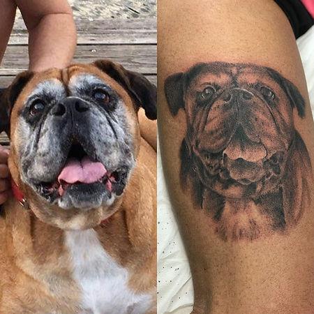 dog portrait, boxer portrait, boxer dog portrait, animal portrait, gregg allan, tattoo gallery ocala, best ocala tattoo